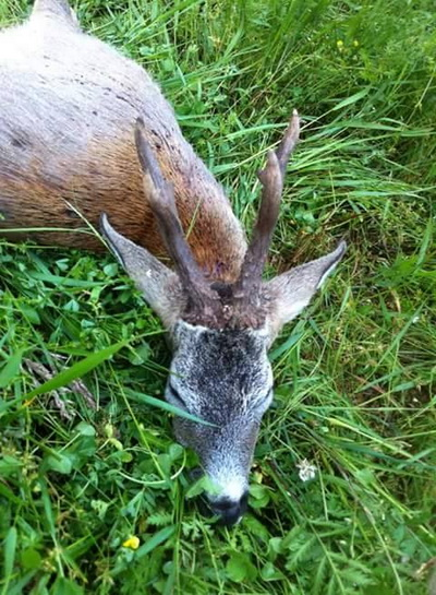 hunting-in-romania-15